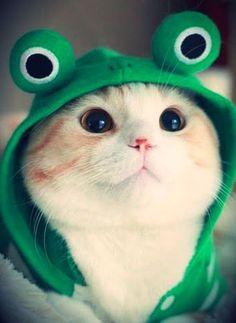 Cat wearing a frog hoodie