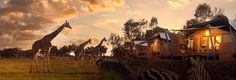 Accommodation | Taronga Western Plains Zoo - Dubbo | Zoofari Lodge ... Wake up to giraffes in Australia!