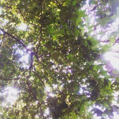 #nature #treehugger #trees #beautifulday #hammocklife by @thehutskys04