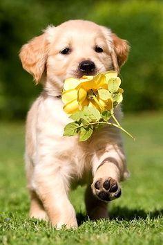 Tener una mascota es fundamental para crear cercania con los animales y con la naturaleza.