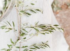Olives Branches