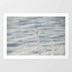 "Art Print / MINI (10"" x 7"") Originalaufnahme (originalaufnahme) Iced branch at backlight by Originalaufnahme $18.00  #posters #artworks #graphic design #texture #inspiration #artists #stretched canvas #illustrations #room #products #pretty #colour #inspiration #Wall Art #Home Decor #Throw Pillows #Cards #Mugs #Shower Curtains #Wall Tapestries#Duvet Covers #Rugs #Wall Clocks #Art Prints #Framed Art Prints #Canvas Prints #Editions #Wall Tapestries"