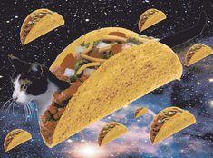 gif taco kitty