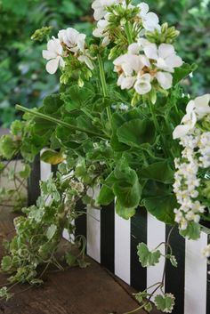 striped planter box