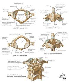 Spine Anatomy | High Cervical Spine: C1-C2