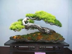 Via fb page I love Bonsai