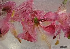 Flower Photography, Seed Pods, Berries, Seeds, Frozen, Invitations, Flowers, Plants, Beautiful