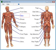 Helping you figure out what parts of your body you'd like to workout.