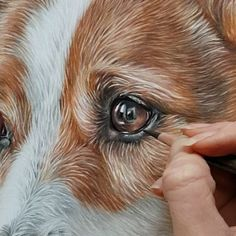 hen drawing fur, the layering of the pencil is so important. Always start with the lightest base colour and gradually get darker, adding Crayons Pastel, Pastel Pencils, Colored Pencils, Animal Paintings, Animal Drawings, Pencil Drawings, Realistic Drawings Of Animals, Pencil Sketching, Drawing Fur