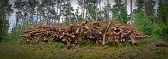 Madeira, Holzstapel