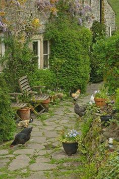 Provencal living - chickens on the patio. Relax with these backyard landscaping ideas and landscape design. Garden Cottage, Home And Garden, Farm Cottage, Chicken Cottage, Chicken Garden, Chicken Coops, Spring Garden, Farm House, The Farm