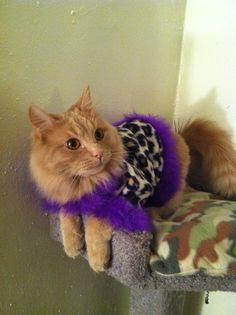 Leopard printpersonalized  pimp jacket cat clothes  by Catclothing, $20.00