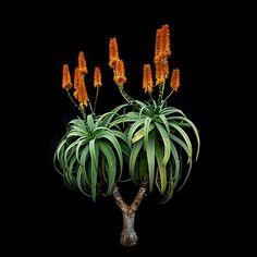 Cactus, Wound Healing, Ikebana, Macro Photography, Aloe, Planting Flowers, Doughnuts, Abstract, Shiva