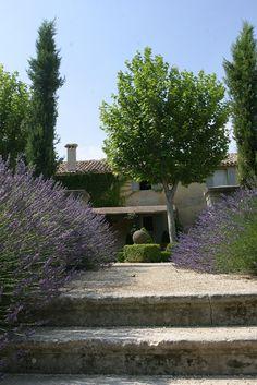 Lavender - Provence