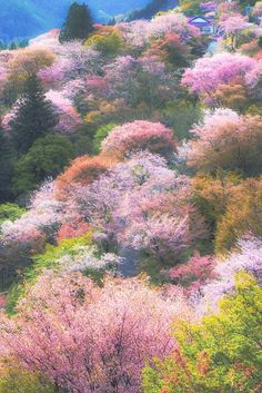 Nature Aesthetic, Flower Aesthetic, Summer Aesthetic, Aesthetic Photo, Pink Aesthetic, Aesthetic Pictures, Animes Wallpapers, Cute Wallpapers, Aesthetic Backgrounds