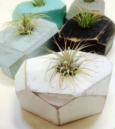 Geometric Wood Office Gift, Planter, Faceted Airplant Holder, Gem Planter by thisfinedayhome on Etsy https://www.etsy.com/listing/234769210/geometric-wood-office-gift-planter