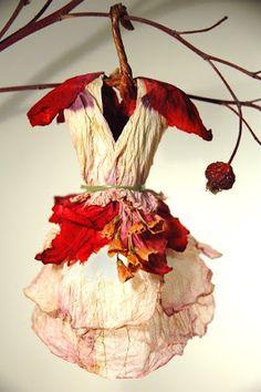 Fairy Dress Miniature by Cactus Petunia
