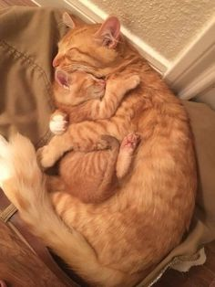 Cute Baby Cats, Cute Cat Gif, Cute Cats And Kittens, Cute Little Animals, Cute Funny Animals, Kittens Cutest, Funny Cats, Baby Kitty, Images Of Cute Kittens