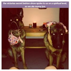 """The Victoria's Secret fashion show spoke to us on a spiritual level; so we ate mom's bra"" - Maverick and Devon"