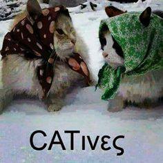 Cat's Cats, Gatos, Cat, Kitty, Kitty Cats
