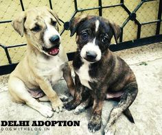 Delhi Adoptions!  Please email harry3797@gmail.com to adopt.