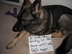 Shaming Your Dogs (17 Pics ) | Seriously, For Real?Seriously, For Real?