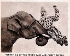 I've seen anyone ride an elephant like that before, I wonder how much training that took...