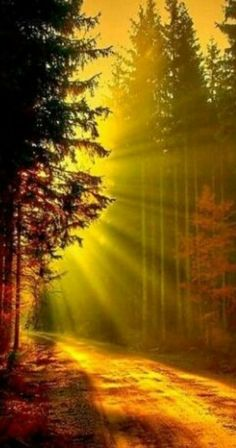 Lighting your path.