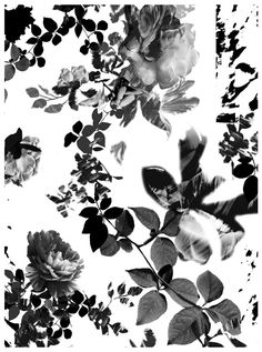 Bella is a textile and print designer, working on a diverse range of projects for fashion, stationary, homeware and editorial. Leaf Prints, Floral Prints, Tinta China, Ink Wash, Kokoro, China Patterns, Botanical Prints, Iphone Wallpapers, Monochrome
