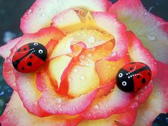 Ruby red Ladybug painted pet rock summer garden yard art office decor fairy garden DIY terrarium lucky ladybird beetle gardener naturalist with portion of proceeds going to Humane Society to help feed the pets. Ladybug Garden, Spring Fairy, Grandmother Gifts, Terrarium Diy, Pet Rocks, Hand Painted Rocks, Unique Gardens, Creative Art, Creative Ideas
