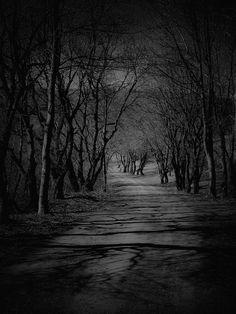 La Foresta Non Fa Paura by Fabio Orsi, via Behance