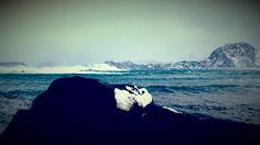 I love this island. Runde bird and treasure island # Norway