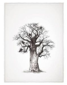 Purchase artwork Baobab Tree - Limited Edition Giclee on Canvas by South African Artist Klaus Tiedge Legacy Baobab Series African Drawings, African Artwork, Tatoo Africa, African Art For Sale, Protea Art, Tree Of Life Symbol, Baobab Tree, South African Artists, Tree Illustration