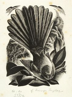 Image result for mervyn taylor printmaker New Zealand Art, Nz Art, Printmaking, Birds, Colour, Google Search, Drawings, Illustration, Artist