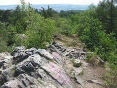 Velká Skála - A Big Rock - a very old deluvial rock formation, very rare and protected, sitting on top of the hill above our house. As teens we used to picnic there and hold bonfires in the stone depressions, totally unaware of its importance!