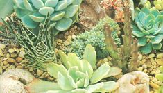 Cacti, Succulents and Other Retro Plant Photos