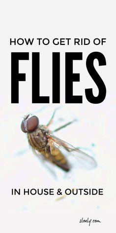 Learn how to get rid of flies in the house and outside with these 6 DIY tips indoors and outdoors. These DIY pest control remedies, tips and fly traps using apple cider vinegar get rid of flies fast. #getridofflies #repelflies #pestcontrol Flies Repellent Outdoor, Diy Mosquito Repellent, Fly Repellant, Snake Repellant, Flys In The House, Fruit Flies In House, Homemade Fly Traps, Homemade Fly Spray, Keep Flies Away