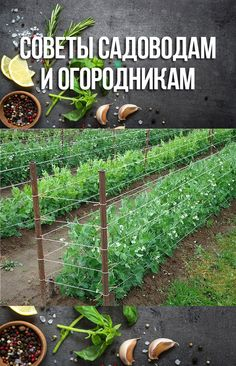 Veg Garden, Garden Art, Vertical Wall Planters, Smart Garden, Pallets Garden, Agriculture, Exterior Design, Beautiful Homes, Planter Pots