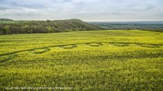 Crop circle: Oliver's Castle, Nr Devizes, Wiltshire - Nexus Newsfeed