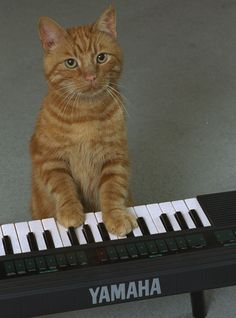 Music For Cats Is The Purr-fect Way To Win Over Your Feline+#refinery29