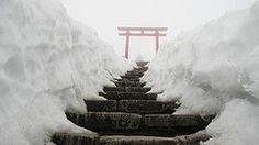 Torii Gate in Winter. Northern Japan.