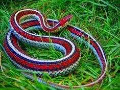 snake - Pesquisa Google