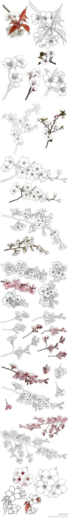 Adult coloring Chinese style