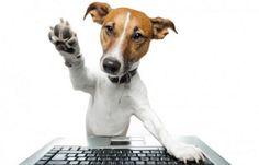 En este artículos analizamos las apps para tu smartphone que te ayudarán a interaccionar con tus mascotas, ya sean perros o gatos.