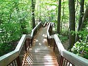 Glen Stewart Ravine Wooden Stairway - Toronto's Many Trails