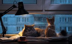 cats in the rain