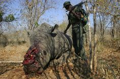Environmentalists and scientists issued dire warnings this week: Stop environmental destruction and the illegal wildlife trade now — or face another pandemic that could wipe out civilization. Kruger National Park, National Parks, Government Of China, Environmental Degradation, Wipe Out, Environmentalist, Online Travel, Save Life, Survival Prepping
