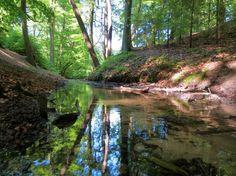 NS-wandeling Veluwezoom, wandelen door de bossen bij Dieren. Beoordeelt als mooiste NS wandeling van nederland. afstand 11 of 14 km Start NS station Dieren