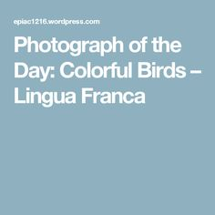 Photograph of the Day: Colorful Birds – Lingua Franca