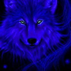 Wolf in blue